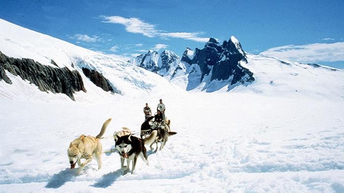 Cães transportam duas pessoas em um trenó pela neve espessa em uma montanha.