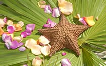 A starfish and flower petals on a large leaf