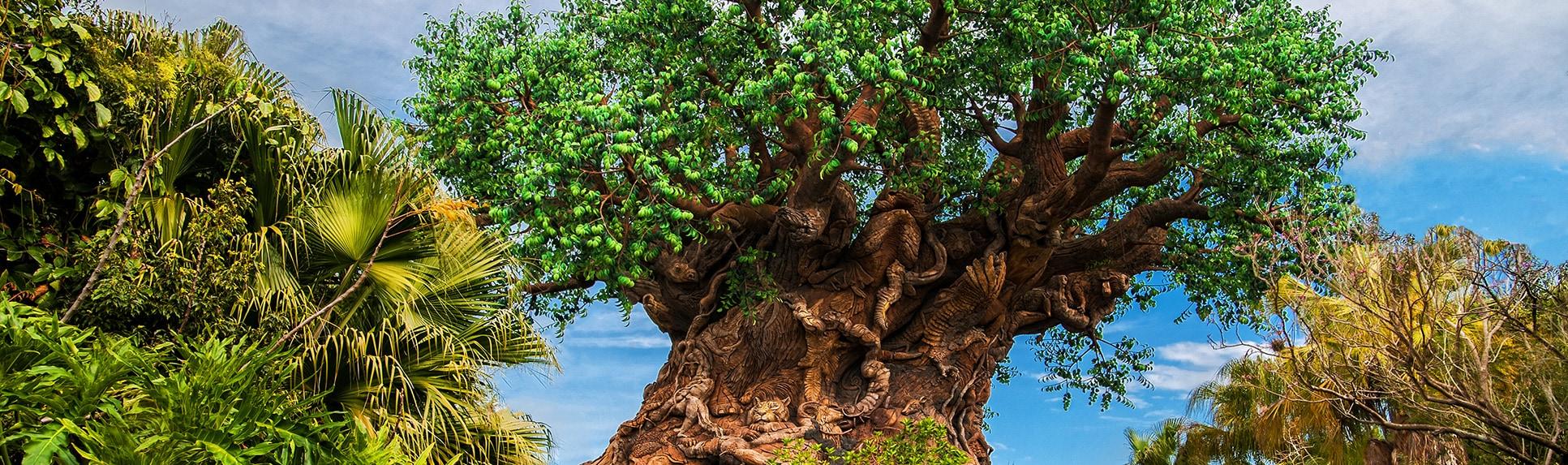 The Tree of Life at Disneys Animal Kingdom park
